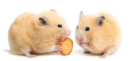 best food for hamsters
