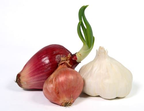 guinea pig foods to avoid onion garlic