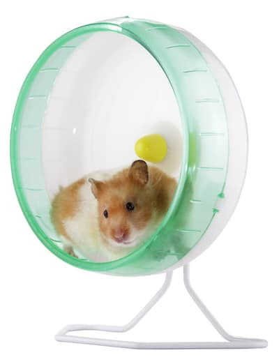 A hamster in an exercise wheel