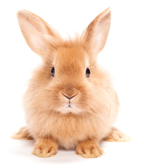 cute rabbit looking at camera