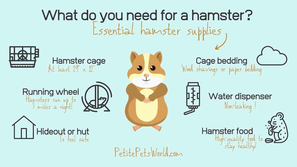 Essential hamster supplies